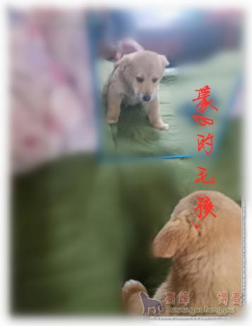 2020-04-17_011924_副本_副本.jpg
