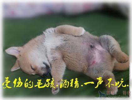 2020-04-17_012032_副本.jpg