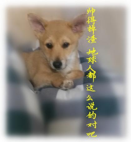 2020-04-17_001536_副本_副本.jpg