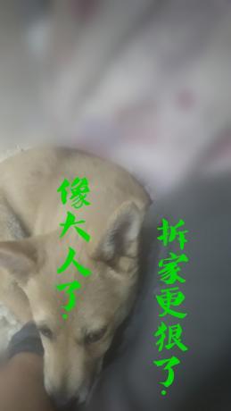 微信图片_20200425213314_副本_副本.jpg